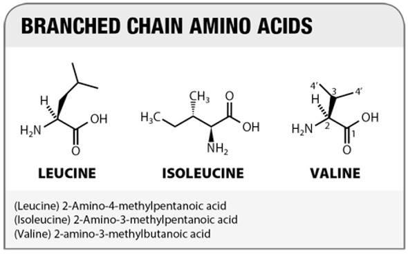 Vai trò của acid amin phân nhánh (BCAA) trong điều trị xơ gan