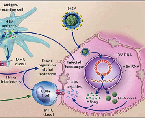 Tình trạng kháng thuốc kháng virus điều trị viêm gan B