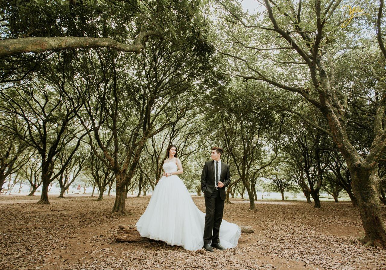 ảnh cưới ngoại cảnh cô dâu đứng trên cành cây mục nhìn chú rể