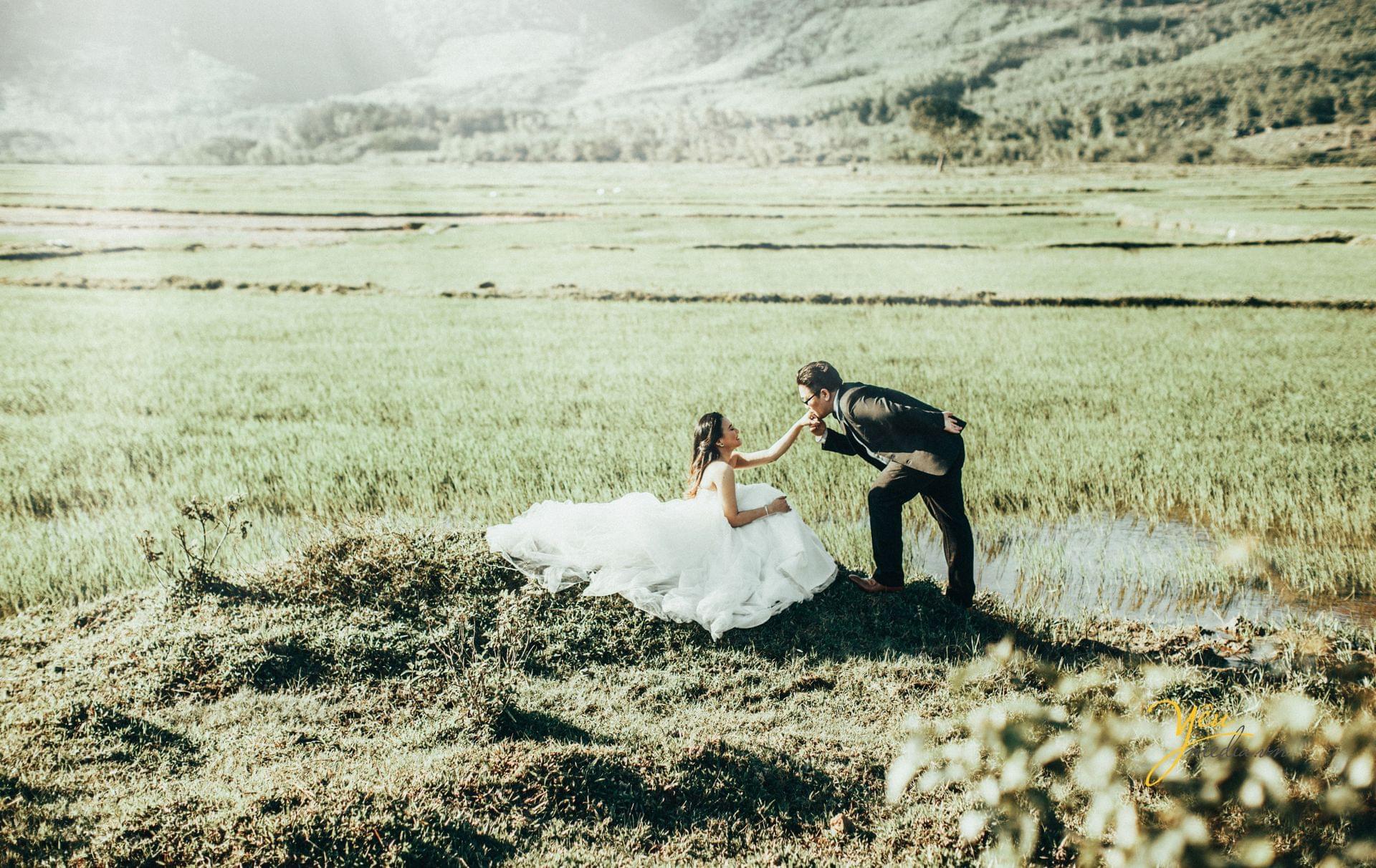 chú rể hôn tay cô dâu trên đồng cỏ
