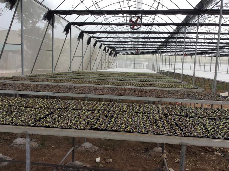 Hệ thống bàn ươm cho trong trại 1000 m2