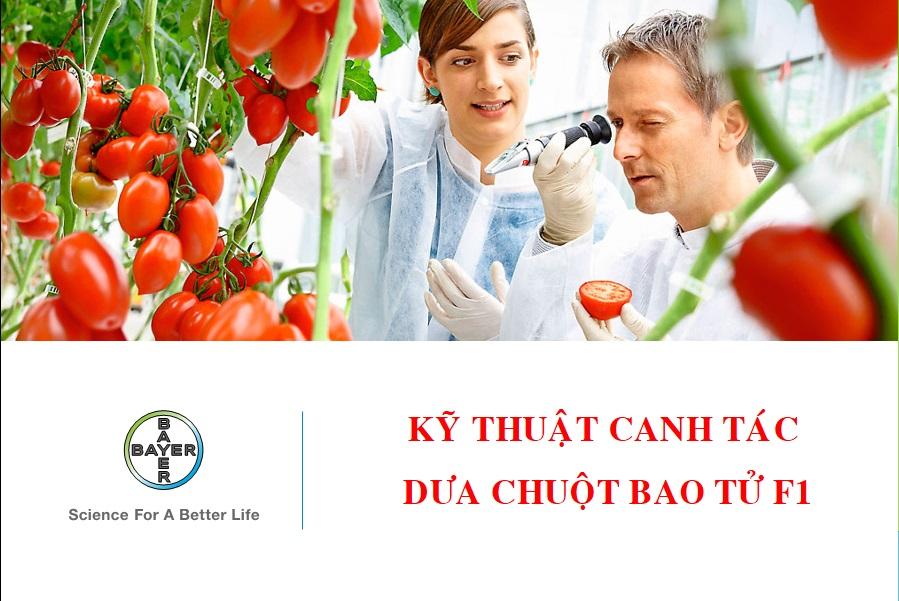 Kỹ thuật trồng dưa bao tử