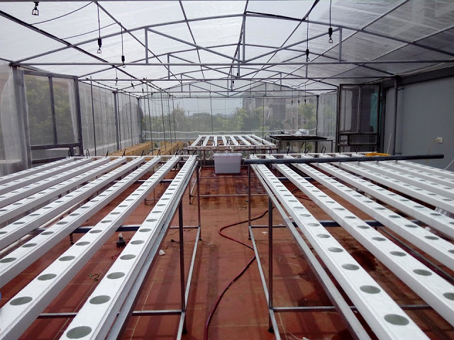 Mini Farm Hydroponics 60m2
