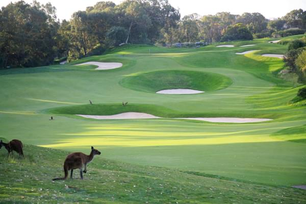 AMCR hay ACR (AUSTRALIAN COURSE RATING)