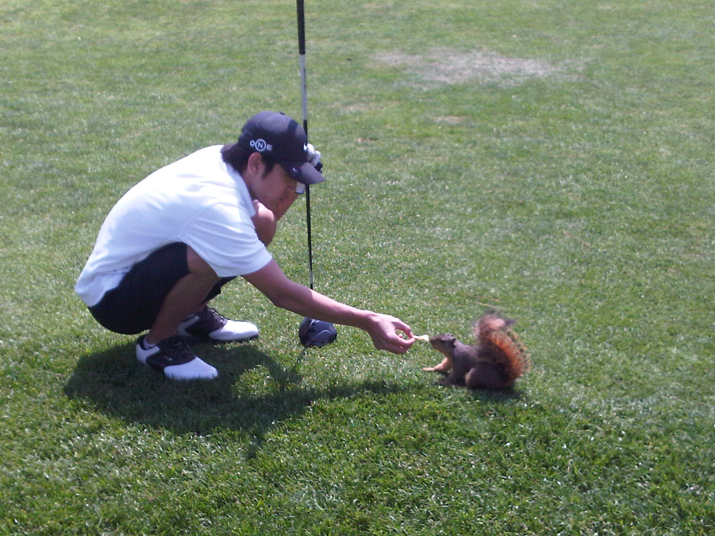SQUARE GROOVE - SQUARE ON THE SCORE CARD - SQUARE STANCE  - SQUIRREL - STABLEFORD SCORING