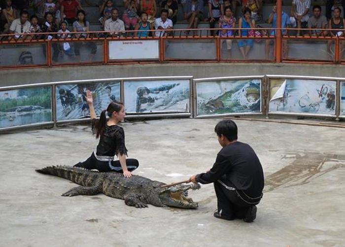 Biểu diễn cá sấu ở đảo Tuần Châu