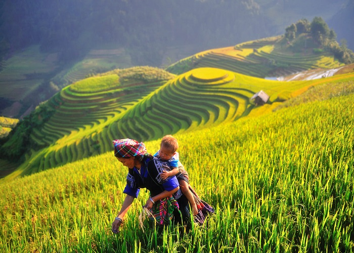 Image result for farming in nghia lo