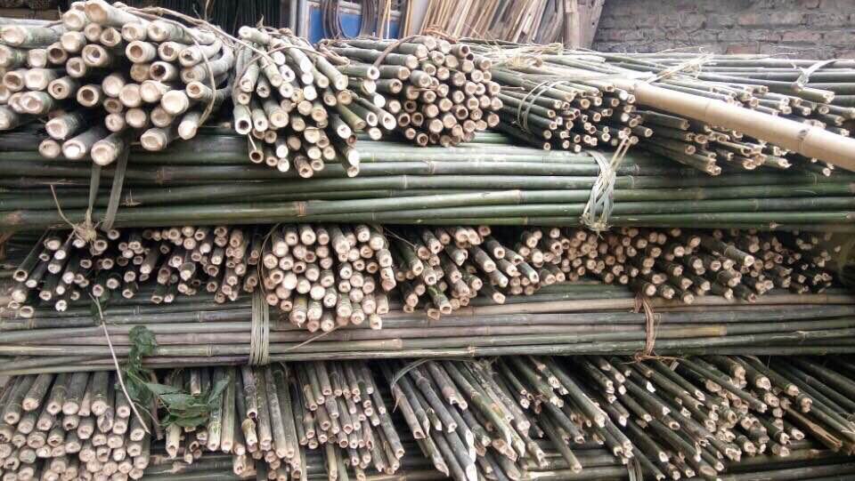In need of bamboo poles in large quantity