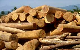 Opportunity to export 1 container of 20FT round timber to Bangladesh