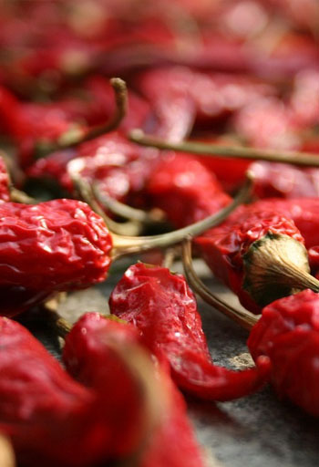 Dried chillies 304 India