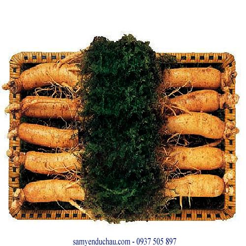 TPCN : sâm tươi 10 củ/kg