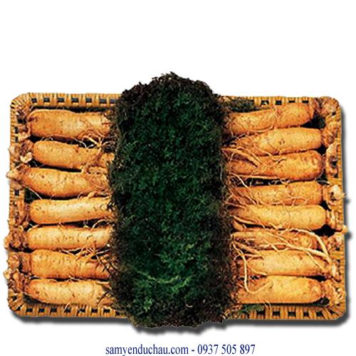 TPCN : sâm tươi 12-14 củ/kg