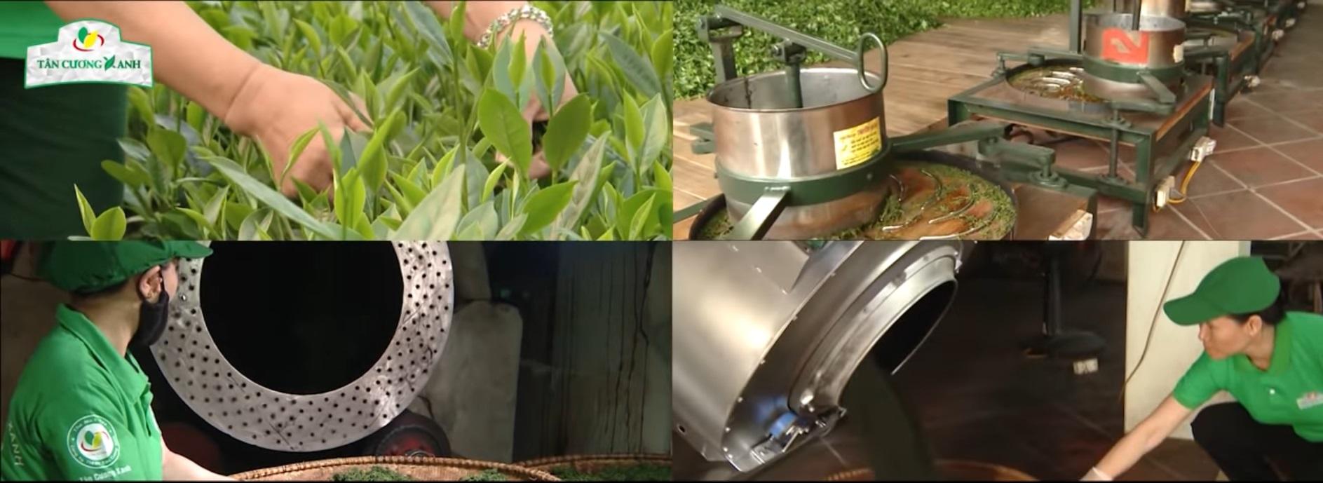 Quy trình chế biến chè búp Thái Nguyên