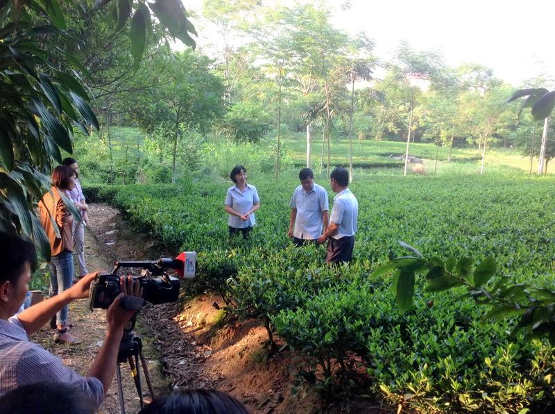 Hợp tác xã Chè La Bằng đang triển khai dự án Chè Thái Nguyên