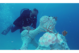 World's largest 3D printed coral reef installed at Maldives island resort