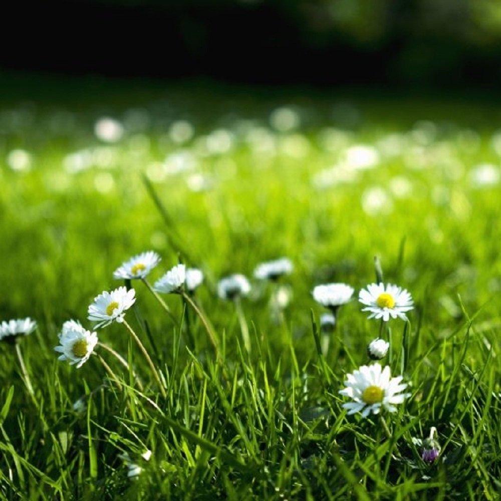 Hương Hoa Cỏ ( Floral )
