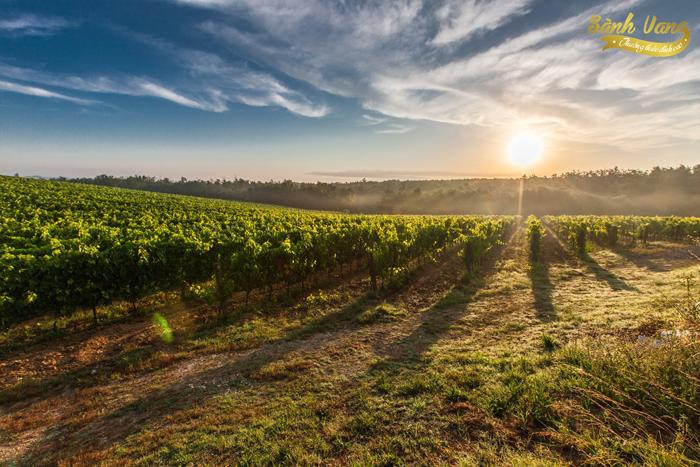 Điều gì khiến Rượu Vang Chile tăng hạng vượt bật những năm gần đây?
