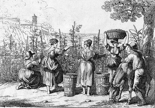 Lịch sử rượu Vang Ý