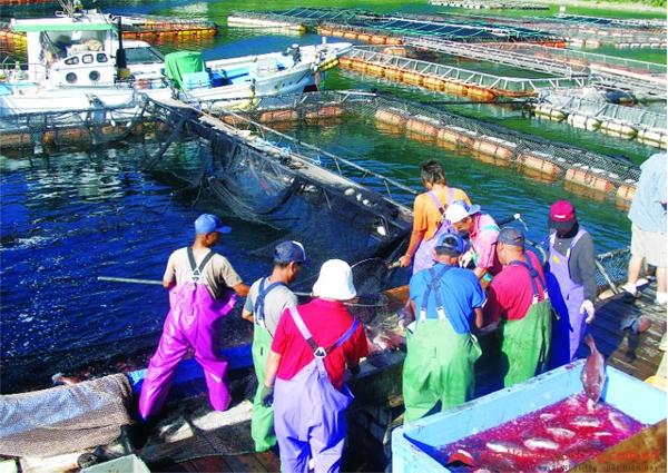 Tuyển 6 nam nuôi trồng thủy sản tại OKINAWA
