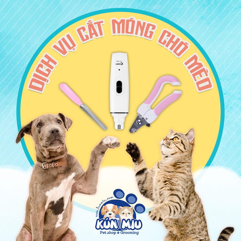 Dịch vụ cắt dũa móng cho thú cưng
