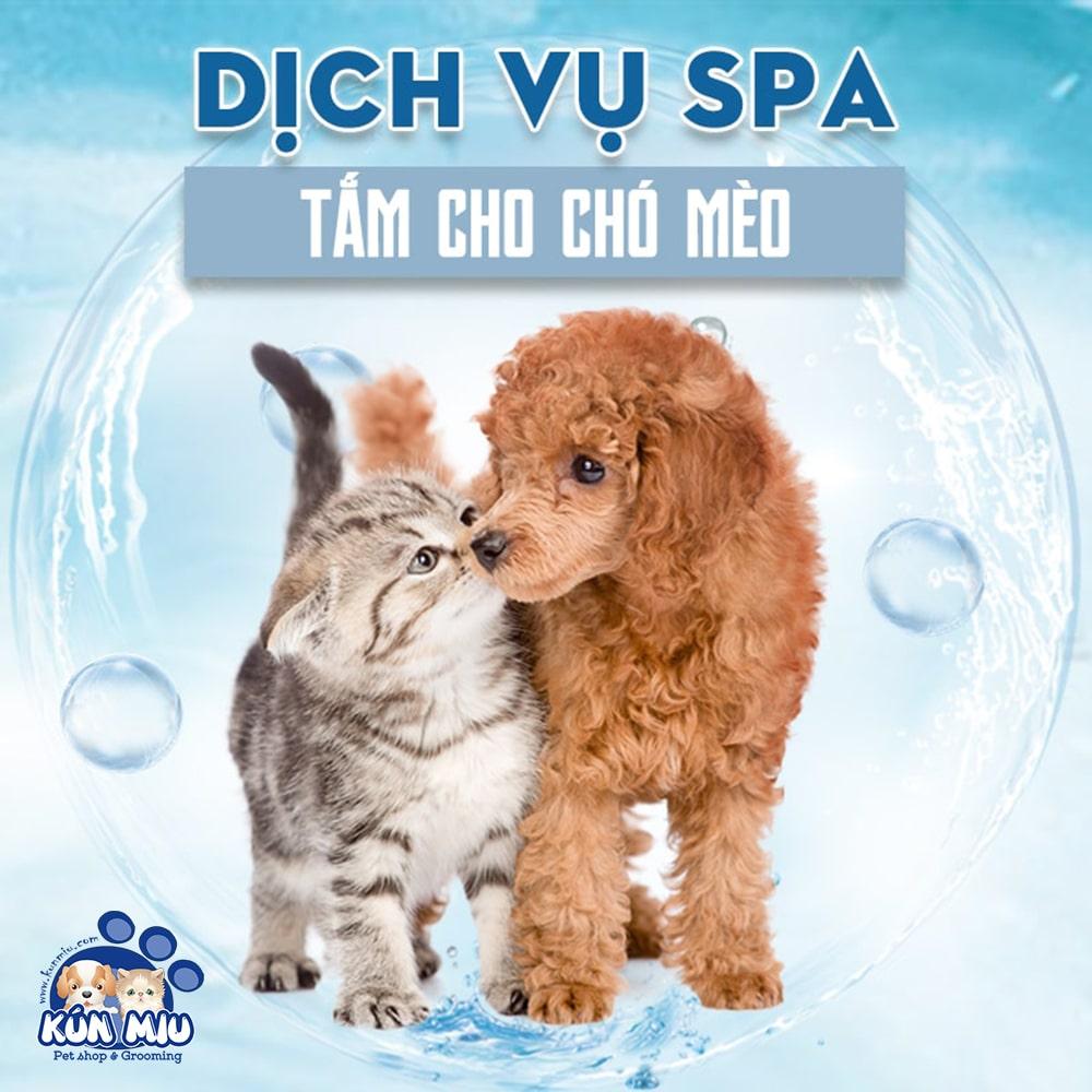 Dịch vụ tắm nấm viêm da ve rận cho thú cưng