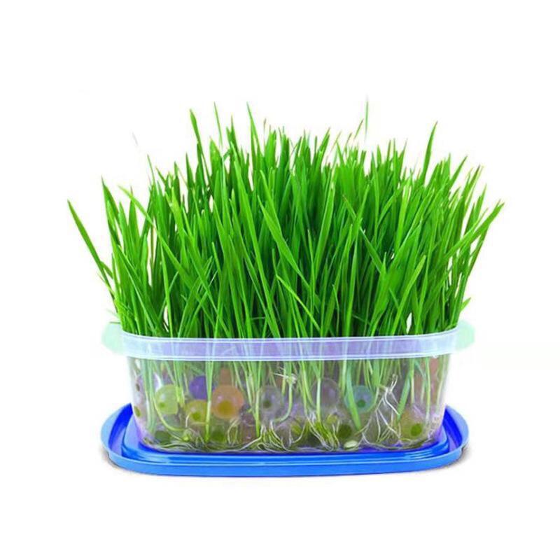 Set hạt giống cỏ trồng bằng hạt nở cho mèo