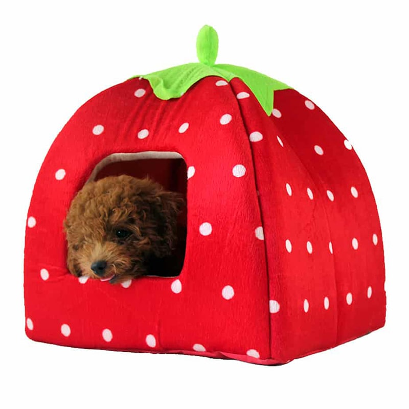 Nhà đệm cho chó mèo hình quả dâu