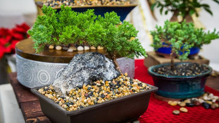 How To Decorate Bonsai Pots With Gravel