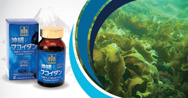 Viên uống Fucoidan hỗ trợ điều trị ung thư Nhật Bản