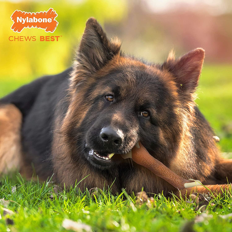 Nylabone Femur Bone Rawhide Alternative Power Chew Durable Dog Toy