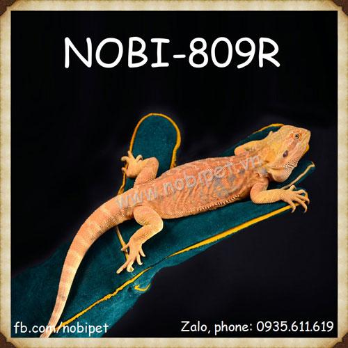 Găng Tay Da Bồng Bế Iguana Rồng Nam Mỹ Và Bò Sát Nobi-809R