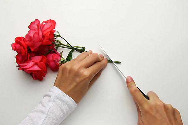 cách cắm hoa dạng tỏa tròn