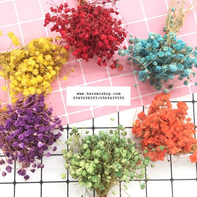 Hoa sao nhuộm màu trang trí