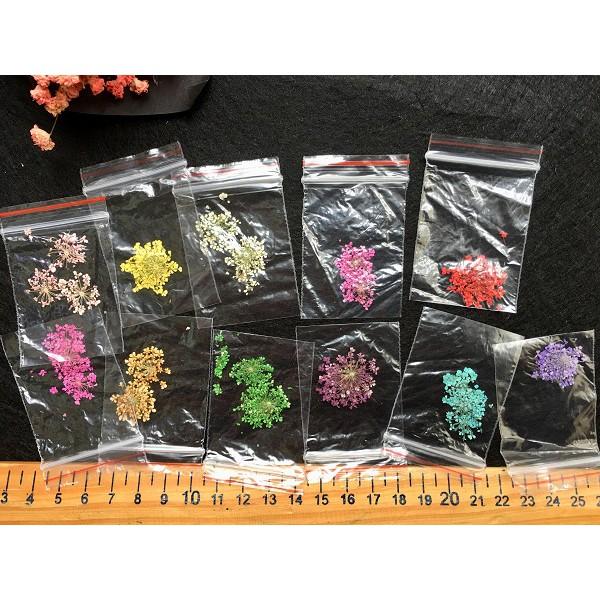 Set 3 hoa khô cùng màu