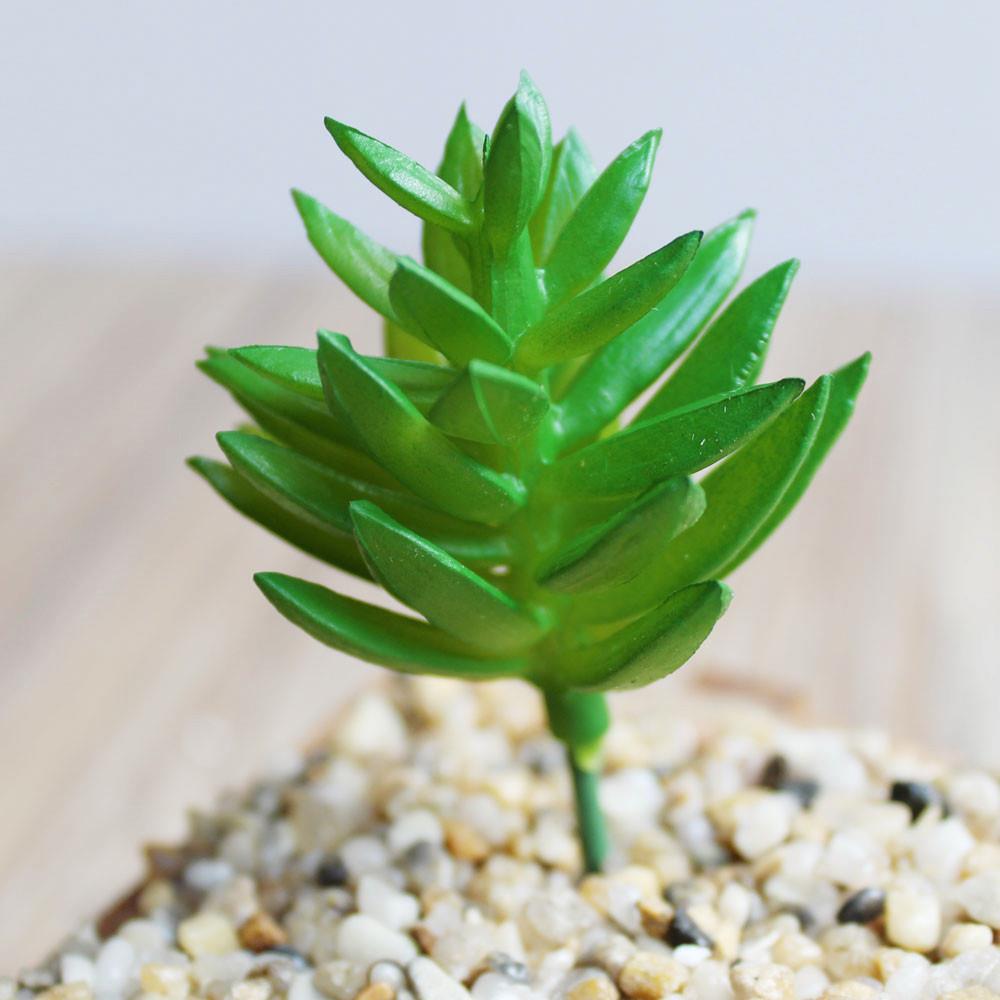 Hoa sen đá - HC731