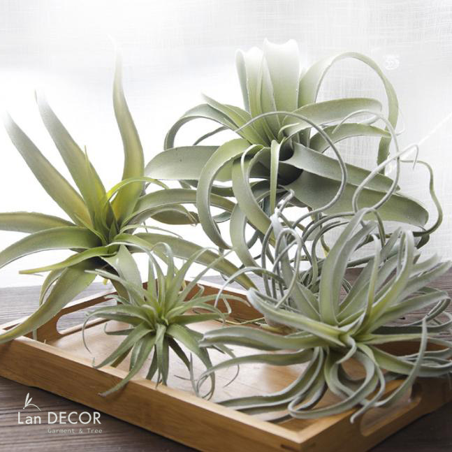 Cây cỏ dứa không khí trang trí nhà, tiểu cảnh tường cây LanDecor - HC1046