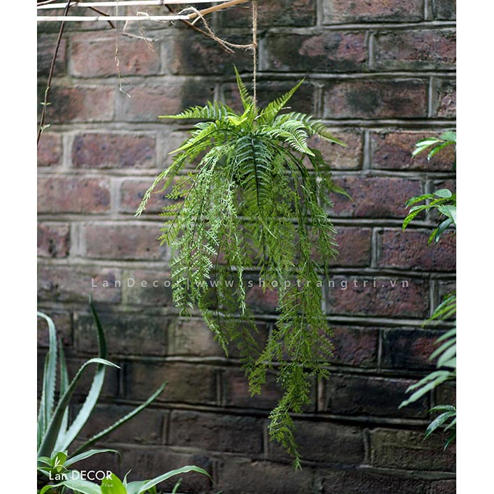 Chậu cây dương xỉ treo - CC134
