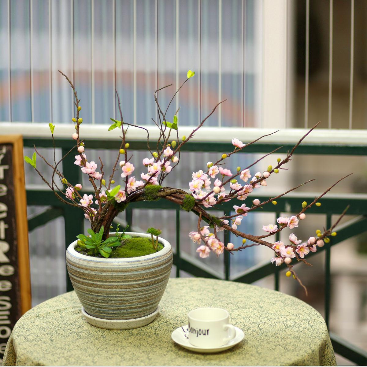 Chậu hoa mai bonsai - HC774-1