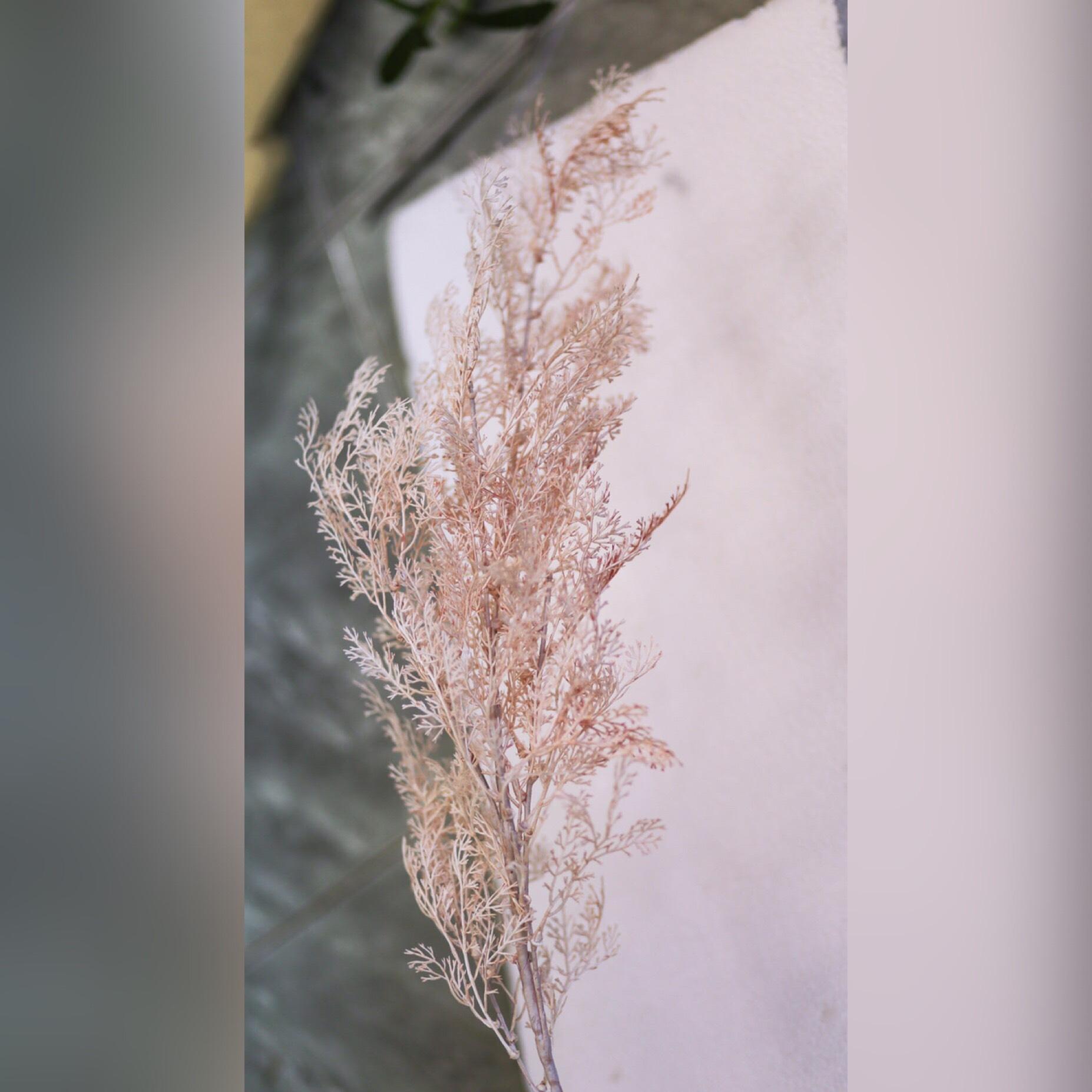 Cành lau nhựa hồng - HN067