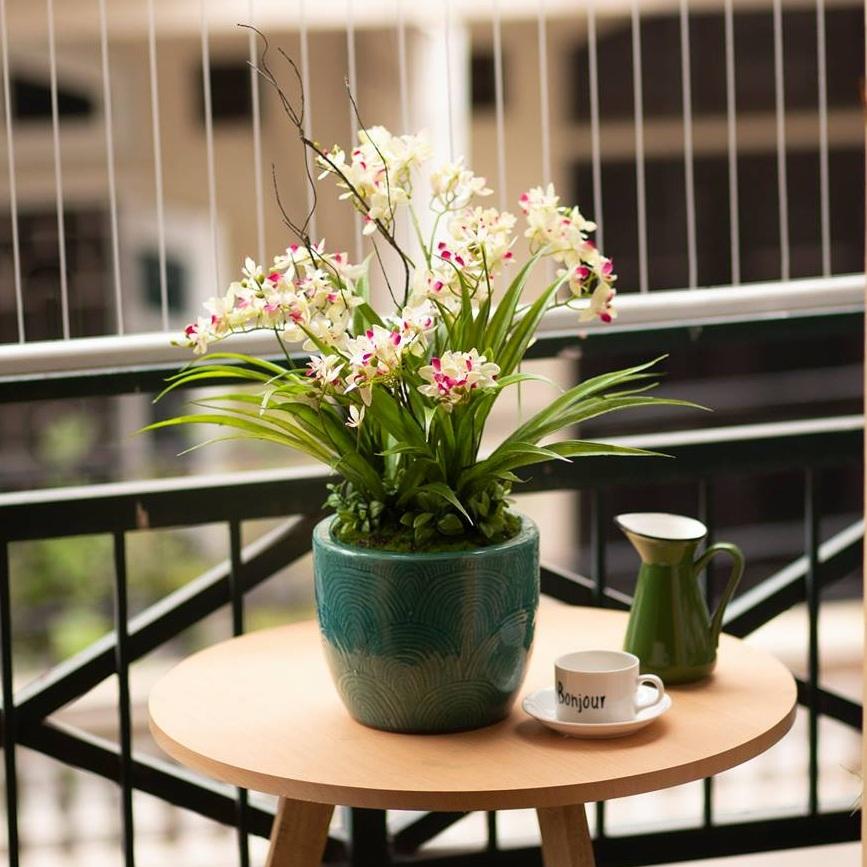 BH675 - Chậu hoa lan trắng