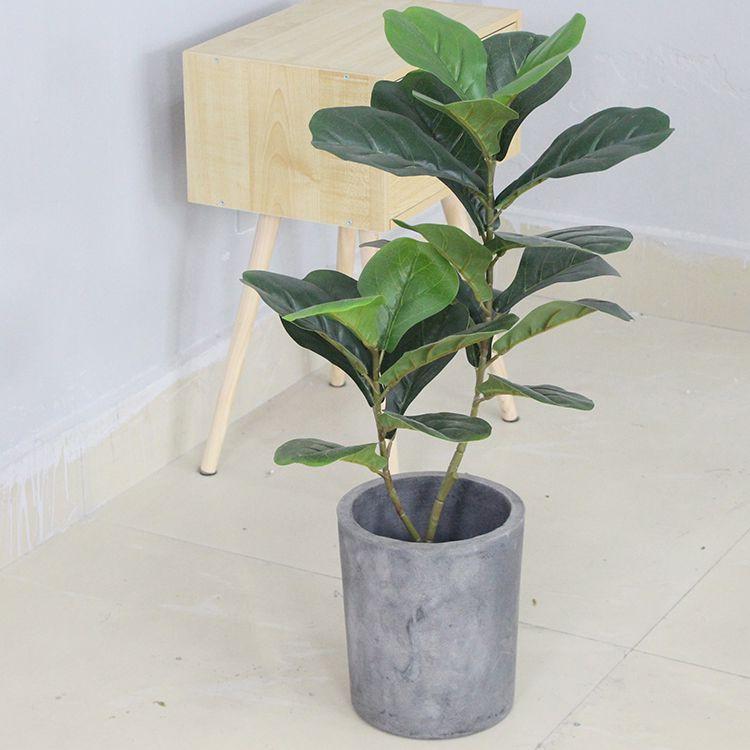 Cây bàng singapore đẹp phong cách hiện đại (75cm) - LC2923