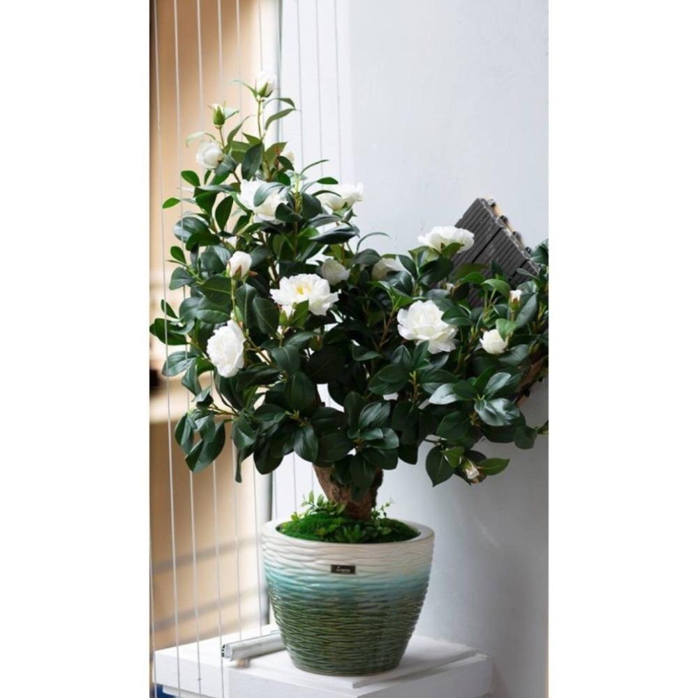 CC072 - Chậu hoa trà trắng