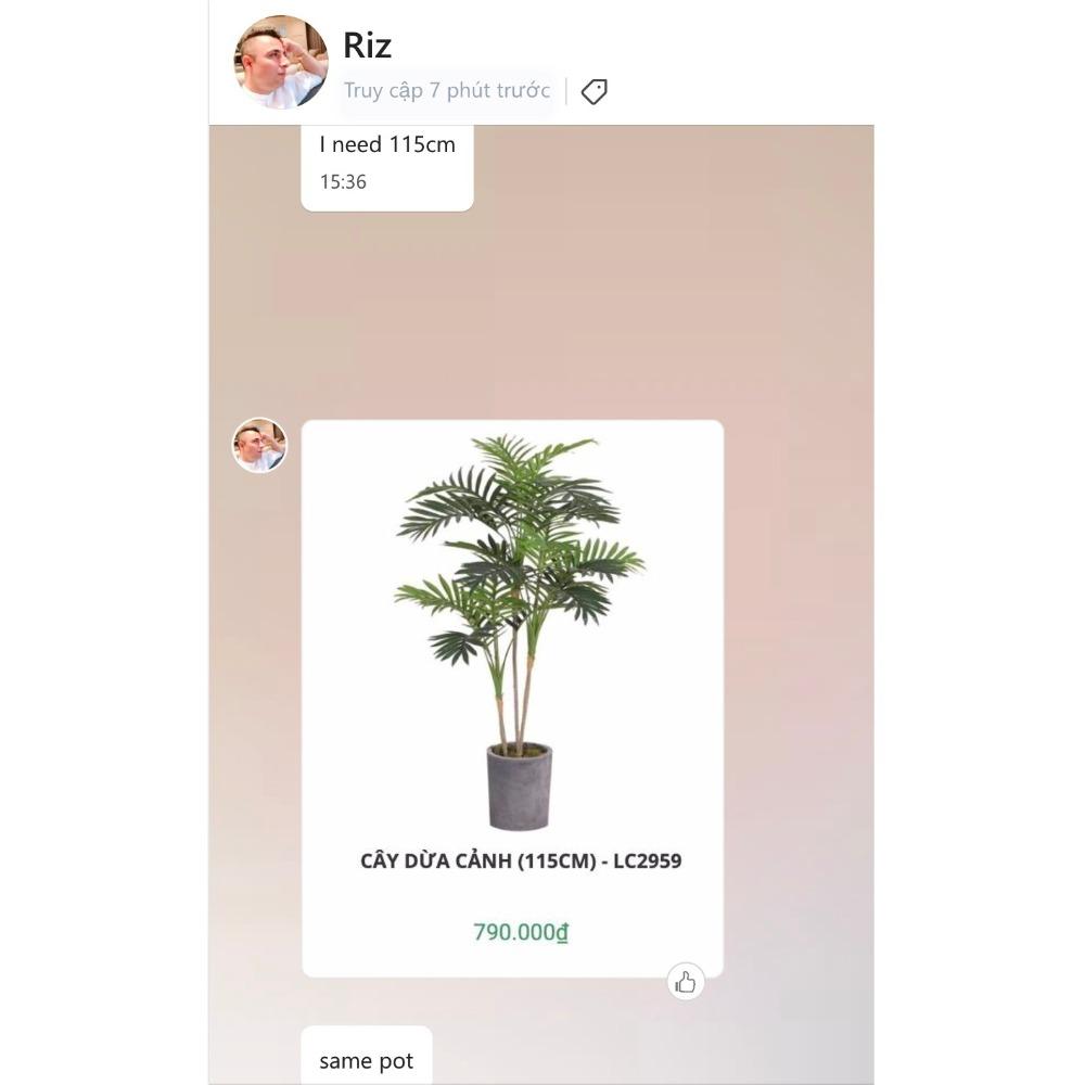 Cây dừa cảnh cho anh Riz