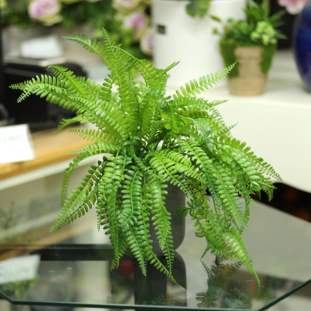 Chậu cây dương xỉ cao 45cm - CC093