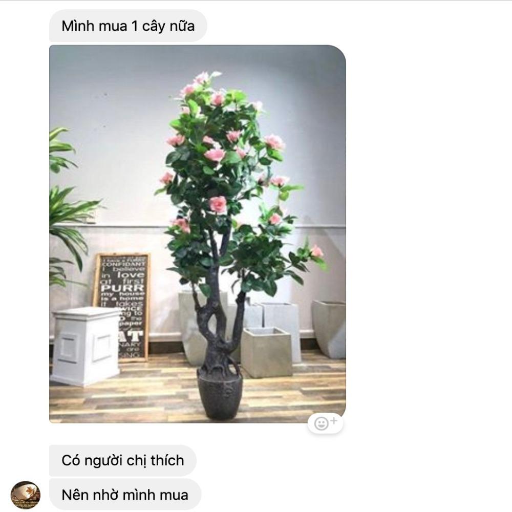 Cây hoa hồng của chị Phương, TP. HCM đặt mua