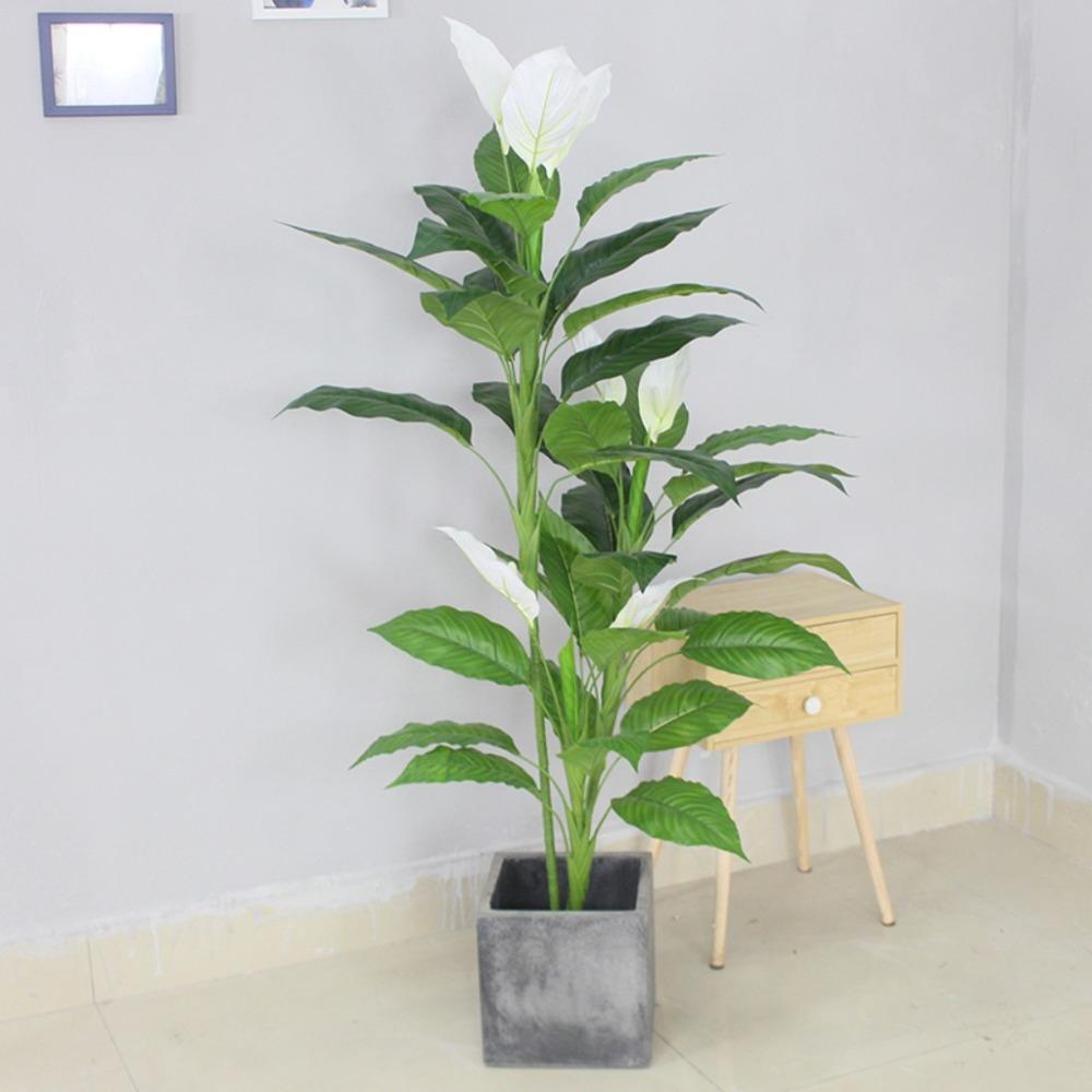 CÂY LAN Ý (155cm) - LC2933