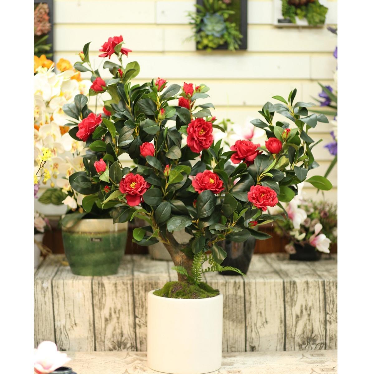 Chậu cây trà đỏ trang trí đẹp Lan Decor - CC081