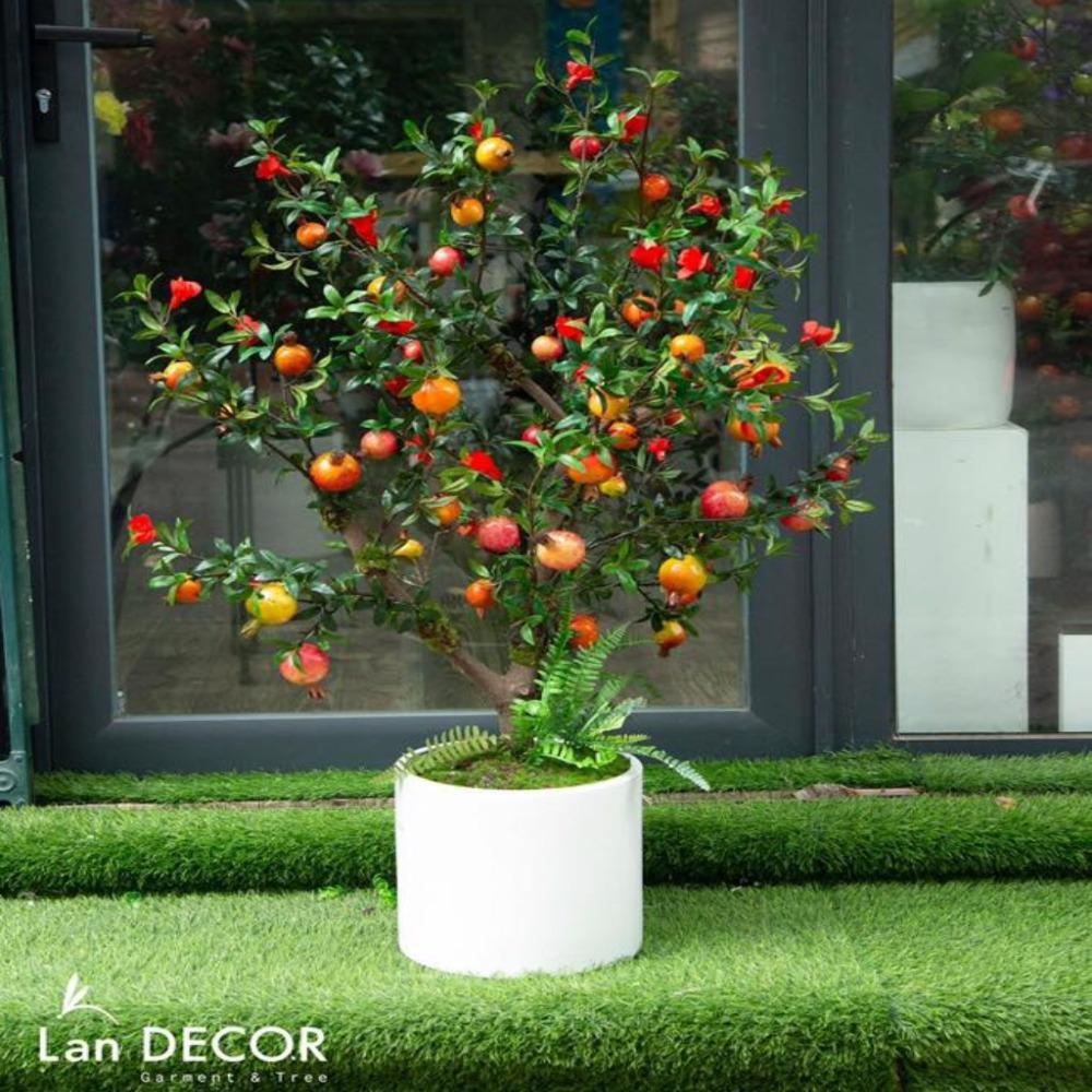 CC046 - Chậu cây lựu hoa đỏ (1.2 m)