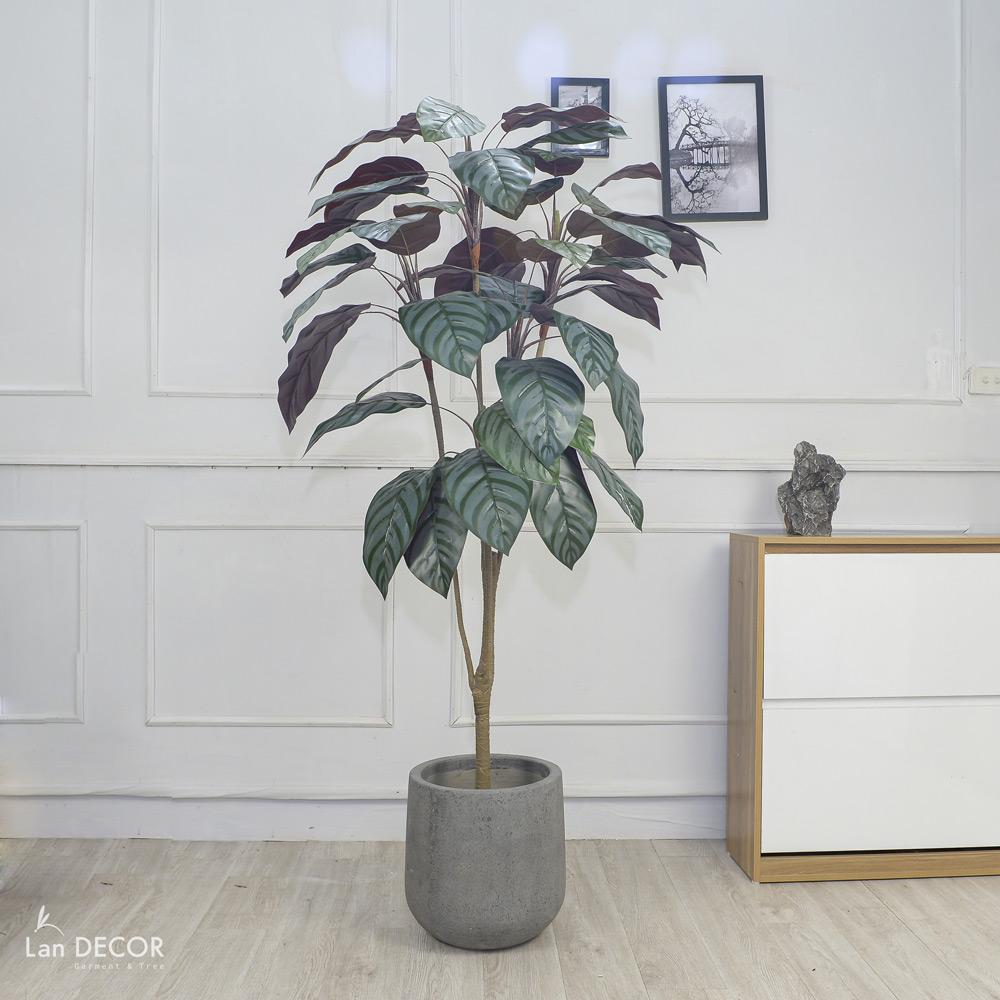 CÂY LÁ MÔN (165cm) - LC2846