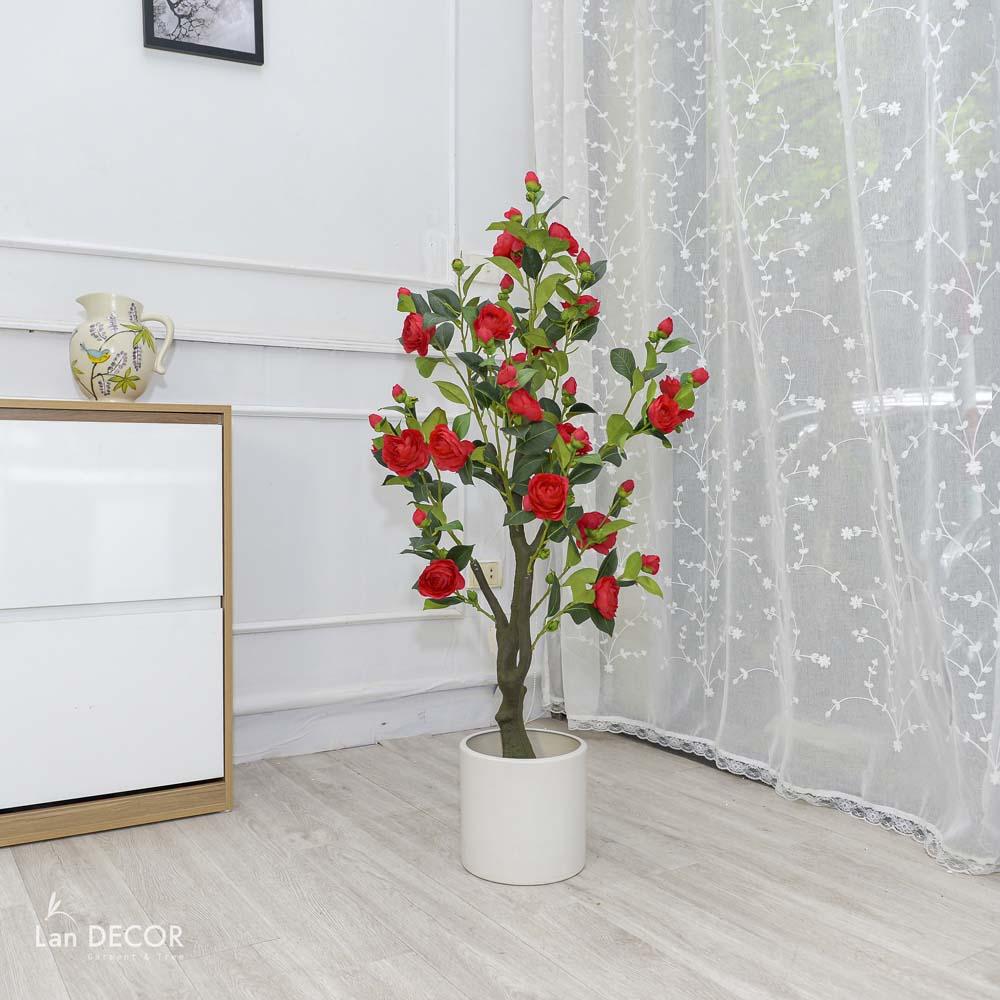Cây trà đỏ cao 1,3m - LC3013